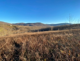 Expansive Views - Scenic 5.58+/- Acre Parcel